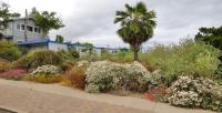 Southern California islands native landscaping