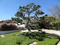 San Diego water smart lawn replacement program