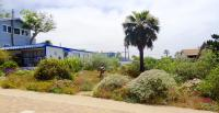 channel islands native landscaping, san diego native landscaping