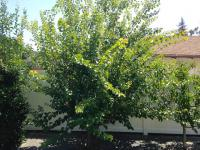 Fruit tree pruning La Mesa San Diego