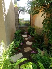 San Diego landscape design, plantscape design, san diego ferns