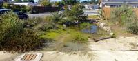 San Diego native landscaping, san diego drought tolerant landscaping, san diego native landscapes, habitat style landscape