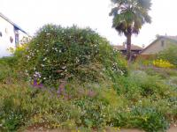 Southern California native plant garden, mainland and islands