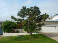 Japanese black pine san diego
