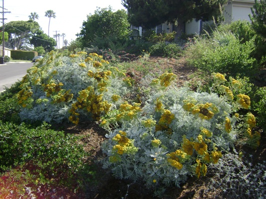 28 best southern california plants landscaping 25 best for Southern california native plants