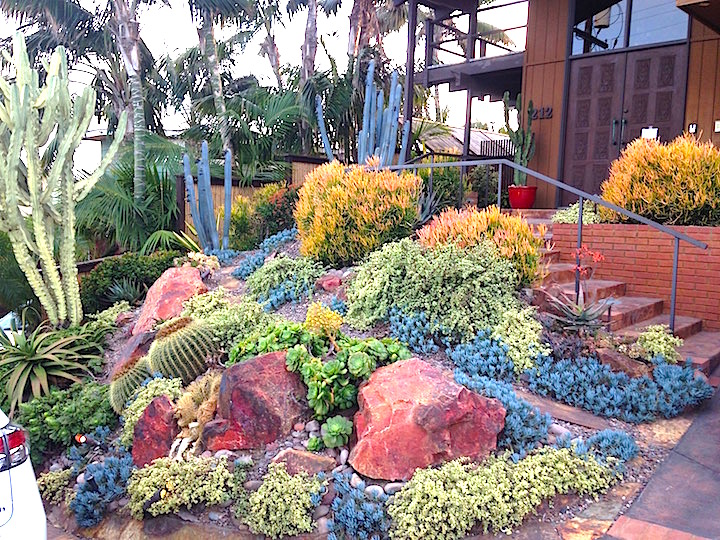 North side of Moonlight Beach area up the street slope. San Diego succulent  landscaping. - Plants Comprehensive San Diego Drought Tolerant Landscaping