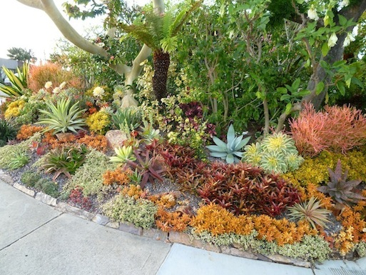 Plants comprehensive colorful succulent composition by for Colorful plants for landscaping